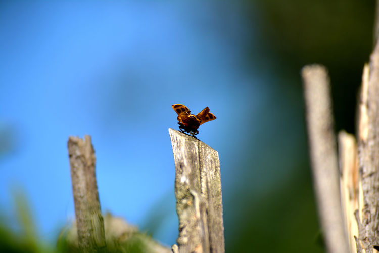 Bee On Wooden Post