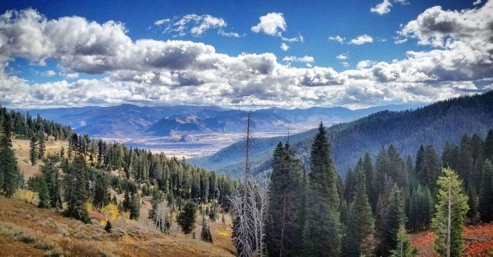 Wyoming Jackson