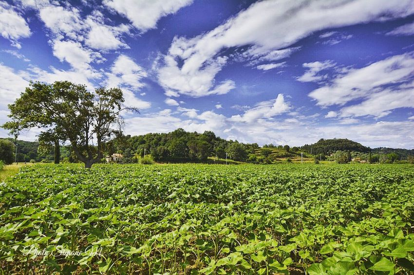 Plant Sky Growth Cloud - Sky Field Tree Tranquility Nature Tranquil Scene Scenics - Nature Agriculture