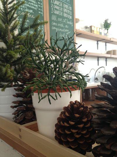 Cafe Morningtea Enjoying Life