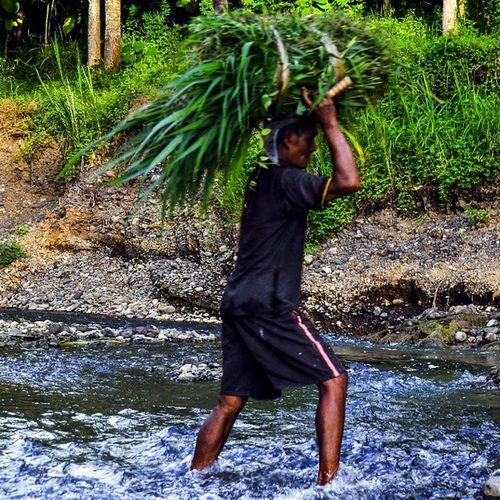 Go home,, Old Oldman Rumput Suket Arit Menyeberang Crossing Kali River Stone Explorekp Explorejogja Work Humaninterest Over Simbah Rosa Kuat Strong Sepuh Ngarit