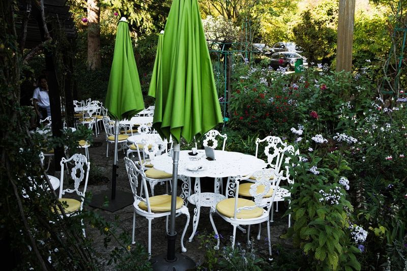Chairs and table against trees
