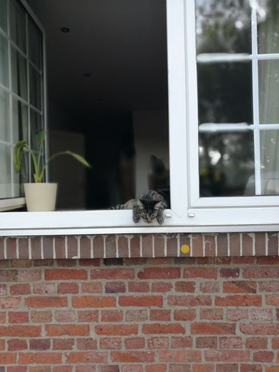 Cat Relaxing Summer Flower Pets Window Brick Wall Residential Building Window Sill House Animal Themes Architecture Building Exterior Window Frame Window Box Brick #urbanana: The Urban Playground