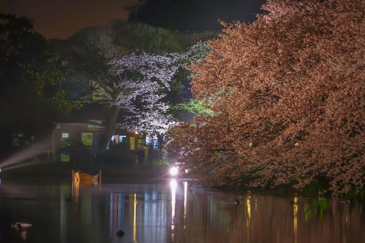 Illuminated trees by lake at night