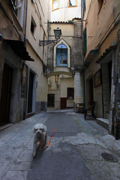 San Remo, Italy San Remo Animal Themes Architecture Building Exterior Built Structure Day Dog Domestic Animals Domestic Cat Italy Mammal No People One Animal Outdoors Pets
