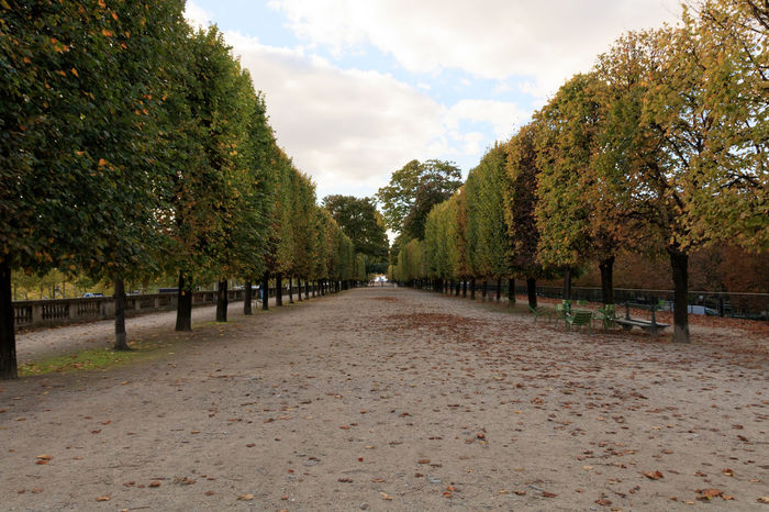 If Trees Could Speak Iftreescouldspeak France Paris ❤ Autumn Beauty In Nature Change Cloud - Sky Day Growth Nature No People Outdoors Scenics Sky The Way Forward Tourist Destination Tranquil Scene Tranquility Travel Destinations Tree