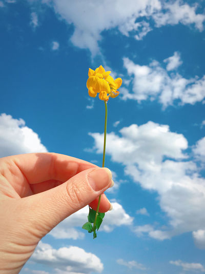 Cropped hand holding yellow flower against sky