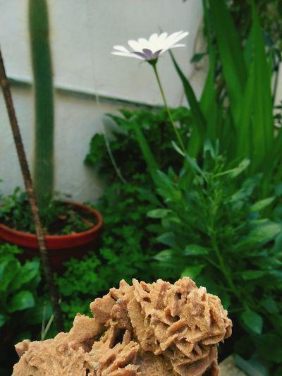 UnderSea Leaf