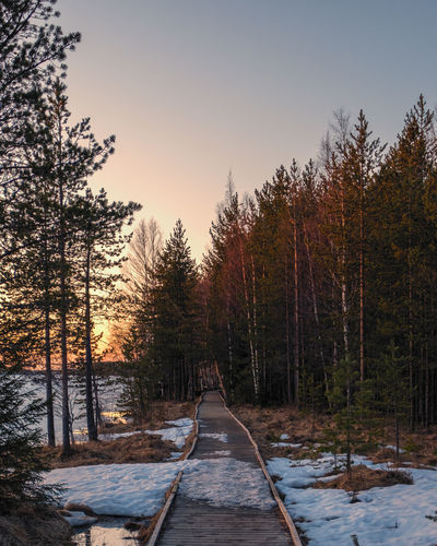 Walkway amidst trees in forest against sky at sunset
