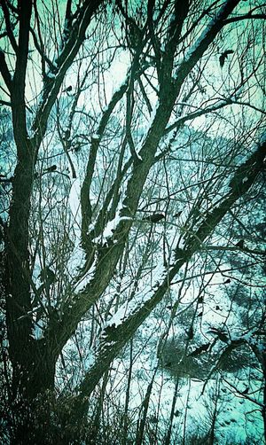 -11 outside? Doesn't bother these guys! ItsFlippingColdOut Ifyougointothewoodstoday.. Stories, Fables & Fairytales Thanks for the invites Paul and Mr Dark, lovely gentlemen... Winter White By CanvasPop