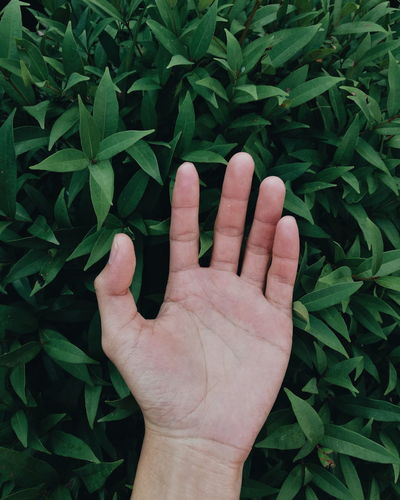 Close-up of human hand against plants