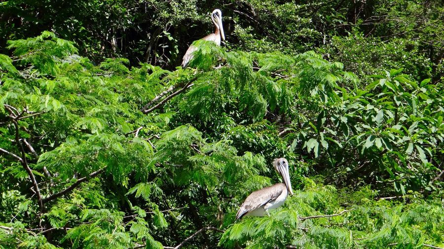 High angle view of gray heron perching on tree in forest