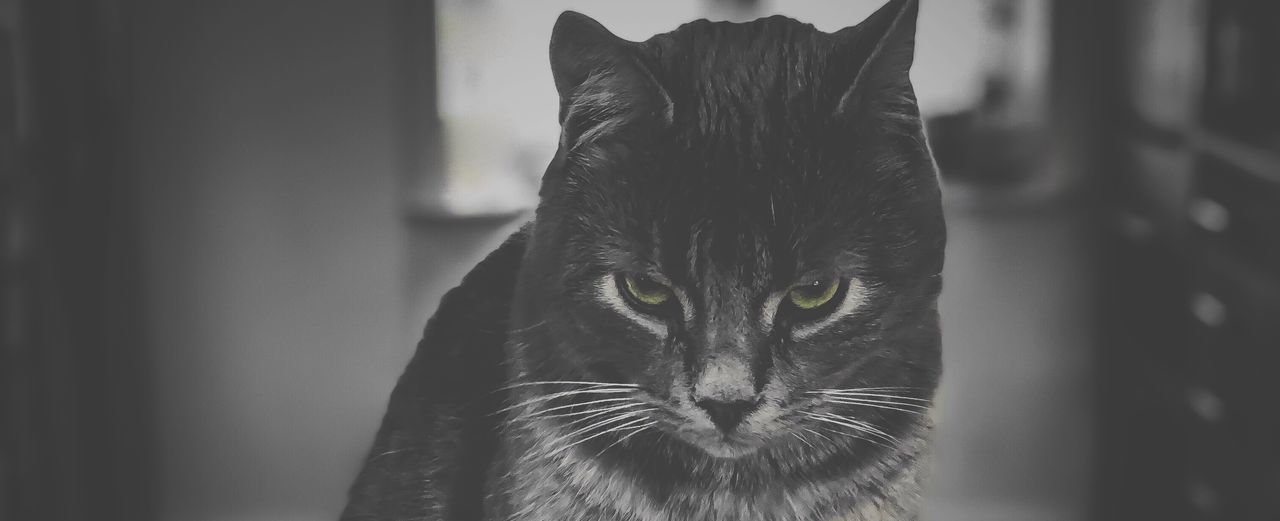 mammal, cat, animal themes, domestic animals, feline, animal, pets, one animal, domestic, domestic cat, vertebrate, close-up, whisker, focus on foreground, no people, portrait, looking, indoors, animal body part, looking away, animal head, animal eye, tabby, yellow eyes