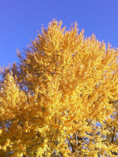 No Filter Sweater Weather :) Fall Colors EyeEm Best Shots - Autumn / Fall