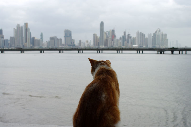 Scenic view of sea against cityscape in background