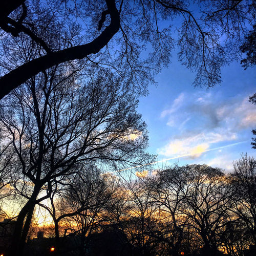 Tompkins Square Park at dusk - NYC Bare Tree Beauty In Nature Branch Cloud - Sky Idyllic Nature No People Outdoors Scenics Silhouette Sky Sunset Tranquil Scene Tranquility Tree