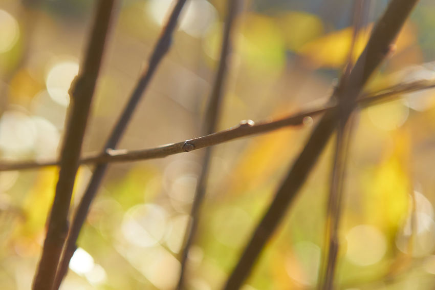 WiddumerWeiher_2017_10_10760 Autumn Autumn Colors Branches Green Green Color Lines Bokeh Bokeh Photography Close-up Day Horizontal Line Leaf Lines And Shapes Nature No People Outdoors Selective Focus Sunlight Vertical Lines Yellow Yellow Color Perspectives On Nature