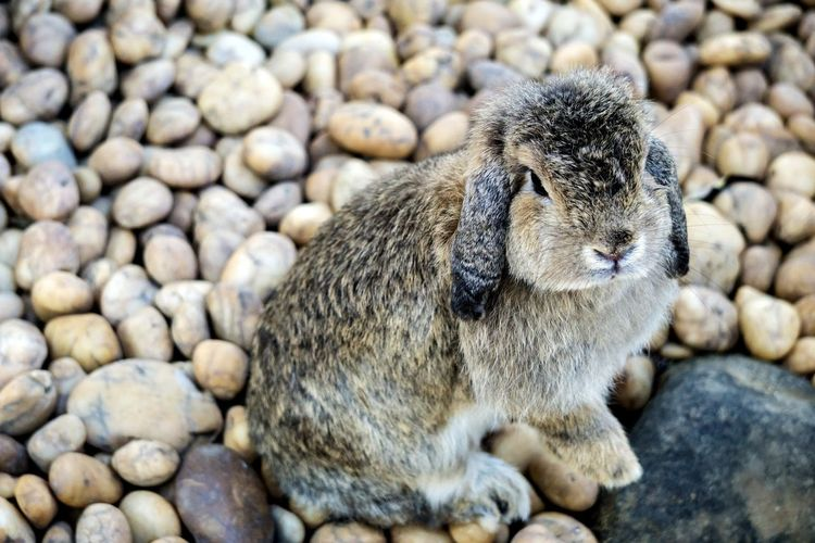 Beach Pebble Outdoors Day One Animal Animal Themes Nature No People Close-up Sand Domestic Animals Mammal Pets Rabbits 🐇 Rabbit - Animal Rabbit Nature