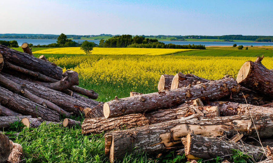 Trunks Tree Foreground Beauty In Nature Country Boy Environment Field Horizon Over Land Landscape No People Outdoors Plant Rural Scene Scenics - Nature Timber Tree Wood Yellow Yellow Fields