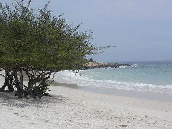 Beach Beauty In Nature Coastline Day Horizon Over Water Idyllic Ko Samet Koh Samed Nature Outdoors Palm Tree Sand Scenics Sea Shore Sky Surf Tranquil Scene Tranquility Tree Water Wave Spotted In Thailand