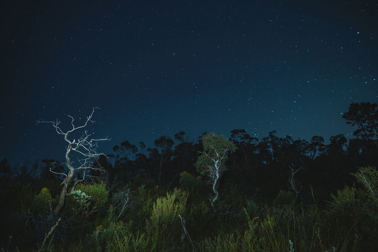 Moon Nights Blue Mountains Australian Bush Blue Mountains Blurred Brook Creekside Full Moon MoonNights Tree Trunk Trees Bushland Haunting  Landscape Light And Shadow Lightpaint Longtimeexposure Moon Light Moon Scape Mysterious Nightscape Nightsky Stars