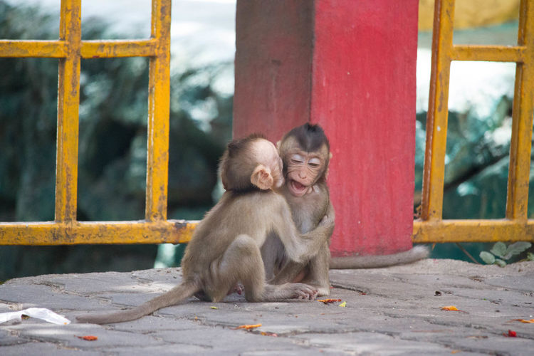 Infant monkeys sitting by railing