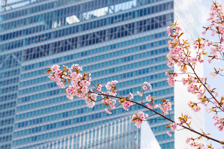Building Exterior Built Structure Architecture Flower Flowering Plant Growth Plant Low Angle View Nature Fragility Freshness Vulnerability  Building Tree Day Branch Beauty In Nature Pink Color Blossom No People Office Building Exterior Springtime Outdoors Cherry Blossom Skyscraper