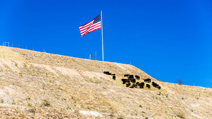 Cattle and Flag on a hillside Sky Flag Patriotism Blue Environment Nature Day Land Beauty In Nature Clear Sky No People Scenics - Nature Sunlight Low Angle View Tranquility Mountain Architecture Outdoors Wind