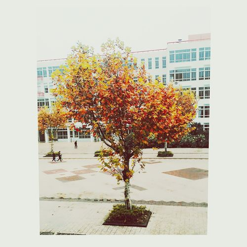 Han Jiang Tree First Eyeem Photo