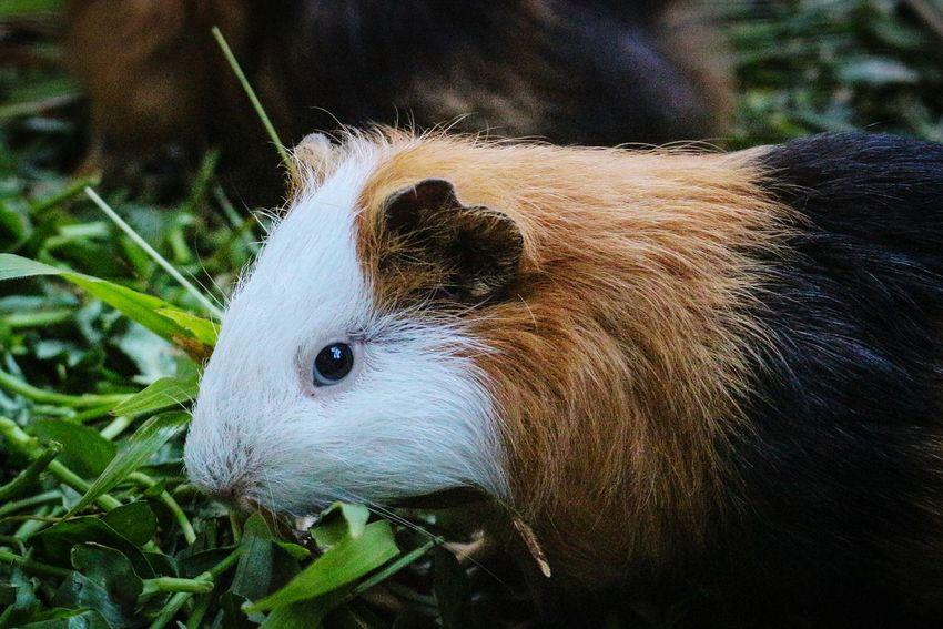 Cute hamster... Cute Animal Themes Fauna Photography Pet Portraits