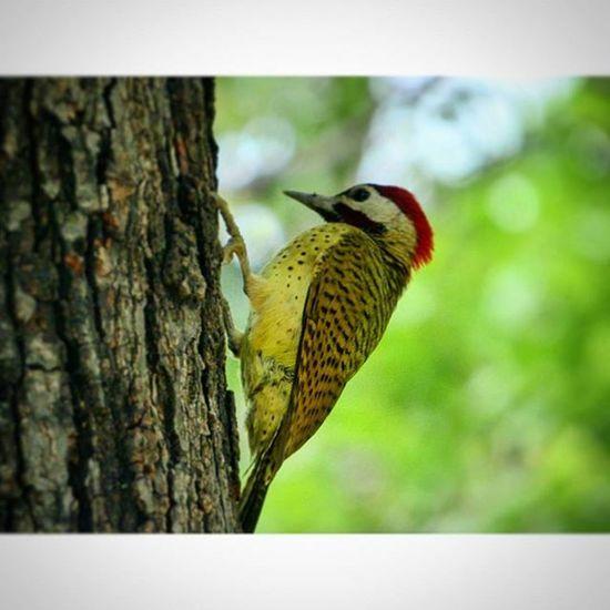 Birds Nature ParqueDelEste Venezuela Caracas Nature's Diversities