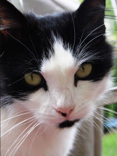 Feline Pets Cat Whisker Portrait Pet Portraits The Week On EyeEm