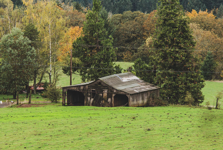 House amidst trees and plants on field in forest