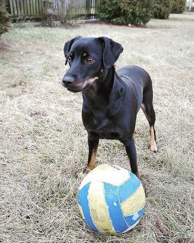 Dog Dogeyes Dogmodel Doginstagram Instadog Photodog Dogphoto Doginsta Pies Piesinst Bestdogmodel Majapies Maja Bestdogmodel Bestdog  Ball Dog_of_instagram