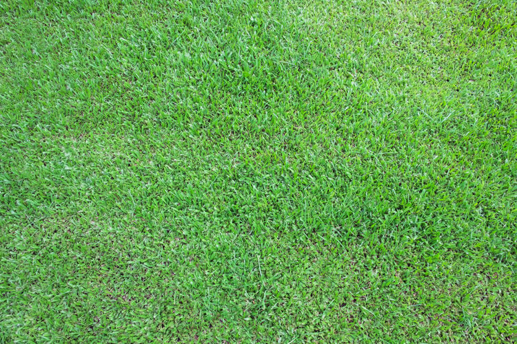 Green grass background top view natural texture and wallpaper. Grass Backgrounds Green Textured  Field Lawn Beautiful Nature Top View Plant Pattern Meadow Freshness Spring Outdoors Leisure Play Game Recreation  Turf Natural Backdrop Grassy Abstract Summer Garden Sport Park Golf Floor Land Ground Growth Surface Exercise Court Carpet Stadium Baseball Recreational  Course Green Color Full Frame No People Day High Angle View Playing Field Textured