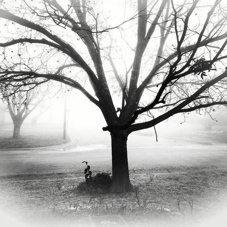 London visits Abilene . A bit foggy this morning. Fb MyBackGarden