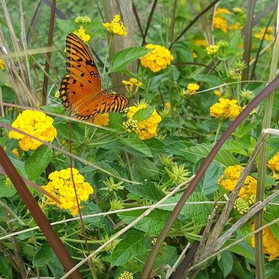 Butterflies are the reminder of the Divine presence and Magic in all of Life and a call to embrace and tune into it InstaQuotes Quotes Nature Flowers Thanks  for Visiting