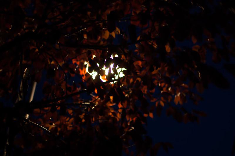 Low angle view of illuminated tree at night