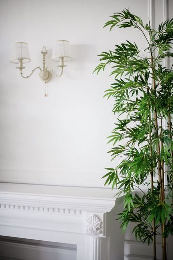 Interior Design Plant Indoors  Nature Wall - Building Feature White Color No People Architecture Built Structure Lighting Equipment Hanging Leaf Domestic Room Day Decoration Plant Part Potted Plant Tree Home Interior Ceiling Houseplant