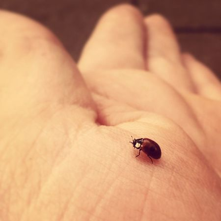 ladybird named Jeff Serodous Vlog SerodousVlog Jeff Insect Ladybird cute Eating My hand @tomheath310