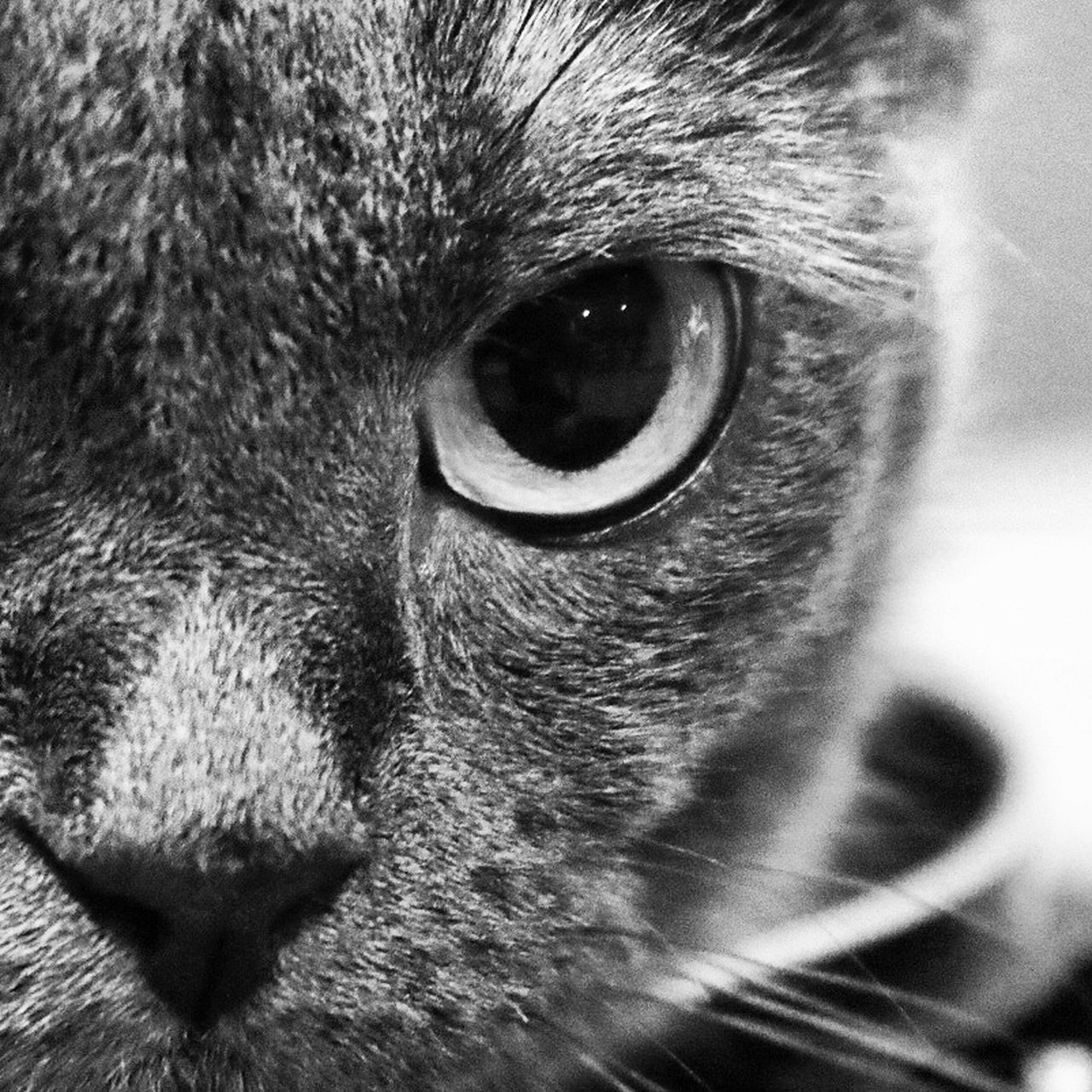 domestic cat, pets, one animal, mammal, domestic animals, looking, cat, portrait, feline, domestic, close-up, animal themes, animal head, no people, outdoors
