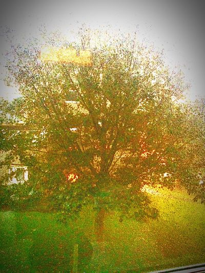 Tree Nature_collection Auntumn Autumn Leaves Raindrops EyeEm Nature Lover
