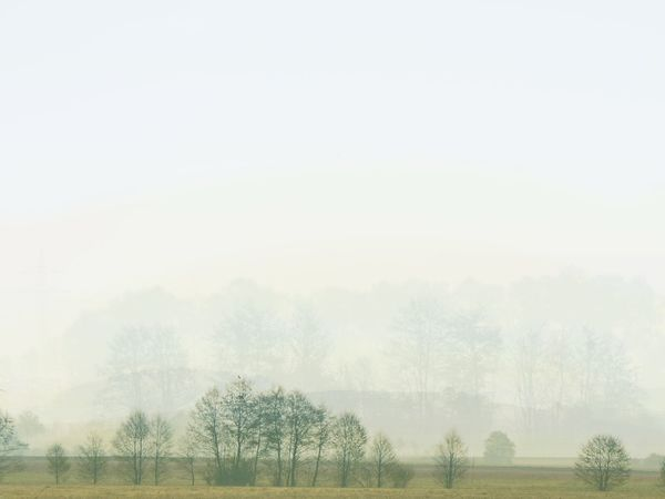 Beauty In Nature Day Double Exposure Fog Hazy  Idyllic Landscape Mist Nature No People Outdoors Scenics Tranquil Scene Tranquility Tree Backgrounds Background Photoshop Freshness Agriculture Rural Scene