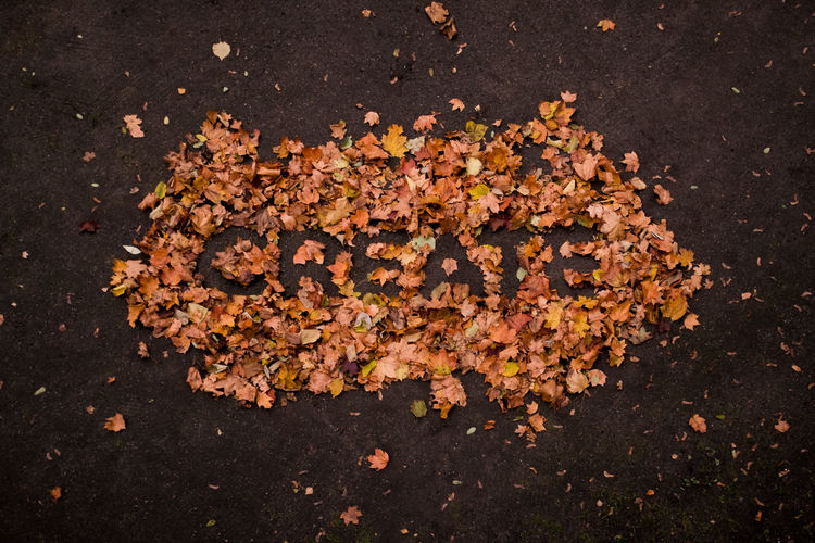 Create every day! Just take and use whatever you find! Autumn Colors Of Autumn Create Creative Creativity Fall Fallen Leaves From Above  Handlettering Inspiration Leaf Lettering Letters Nature Typography