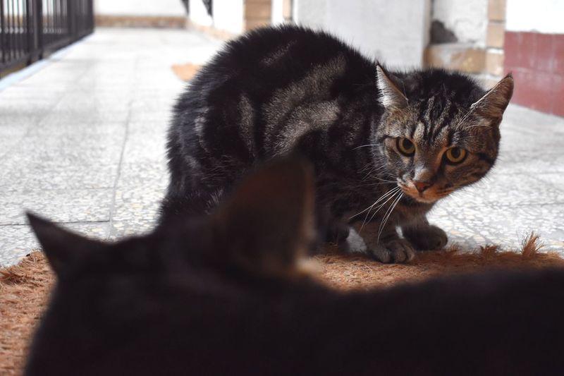 Close-up portrait of tabby kitten