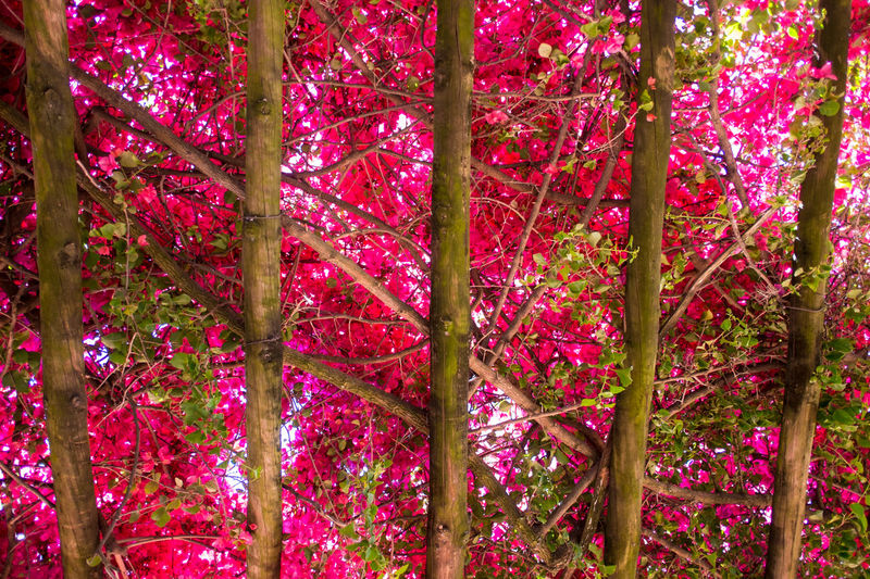 Beauty In Nature Branch Close-up Day Flower Freshness Growth Low Angle View Nature No People Outdoors Pink Color Tree BYOPaper! The Great Outdoors - 2017 EyeEm Awards EyeEmNewHere