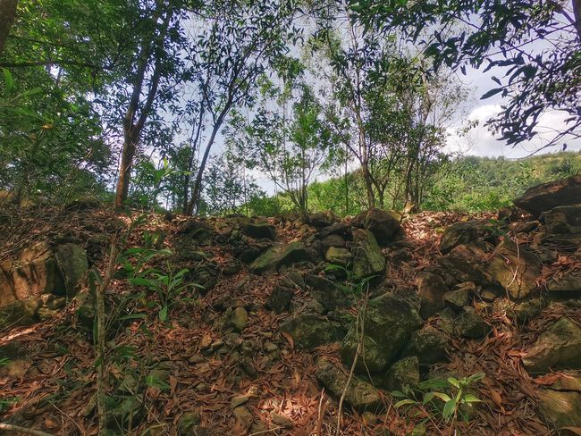 Nature GoPro Hero6 DuaEnamKosongLima Growth Tree Nature Outdoors Day No People Beauty In Nature Plant Backgrounds Low Angle View Branch