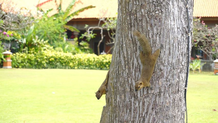 Squirrells Squirrel Tree Trunk Tree Day Focus On Foreground Outdoors Nature No People Animal Themes Close-up