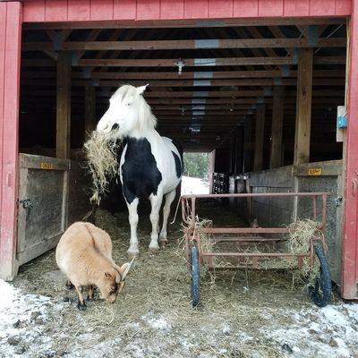Winter Horses Farm Life Furry Friends Goats Animals Togerherness EyeEm Selects Animal Themes Domestic Animals Mammal Built Structure Outdoors Pets No People Architecture
