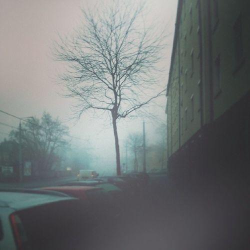 Fog U 2